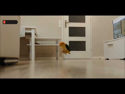Papuga Czarek przedstawia -Poniedziałek vs Piątek/  Monday vs Friday -Parrot version