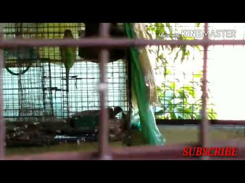 My Full Setup Share With You Guys#our Loving Birds Pets Hindi