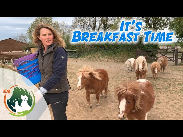 It's Breakfast time for ALL the horses!