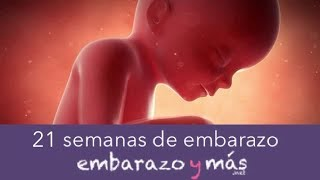 21 semanas de embarazo - Quinto mes - EMBARAZOYMAS
