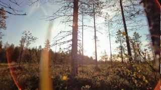 During the summer in Lapland - The North of Finland, nature speeds ...