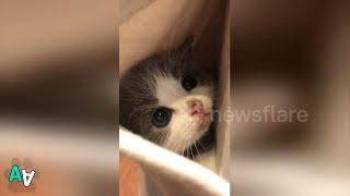 Kitten Loves to Stay in Owner's Pocket