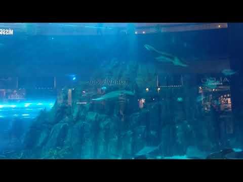 Views Of The World's Largest Aquarium And Underwater Zoo in Dubai-3
