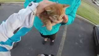 I sound stupid, but I saved a kitten.