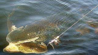 Ловля щуки летом видео  Смотреть видео про ловлю щуки  Рыбалка видео бесплатно