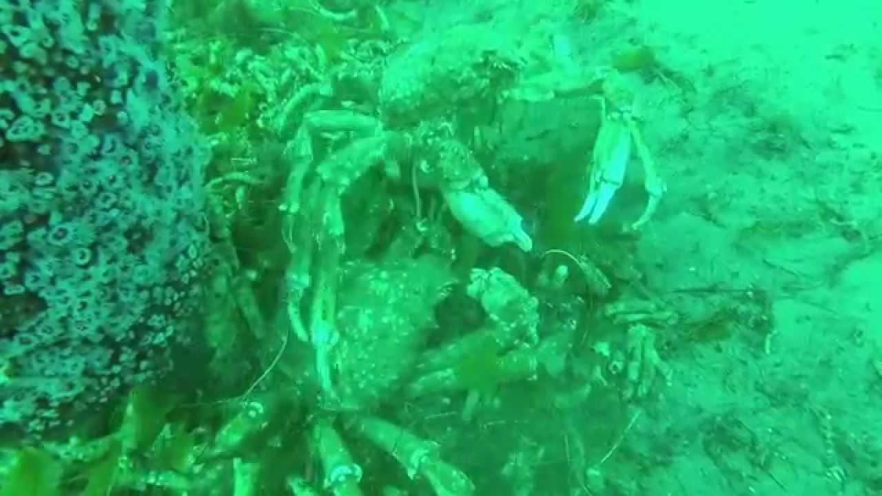 Scuba Dive Veterans Park Redondo Beach