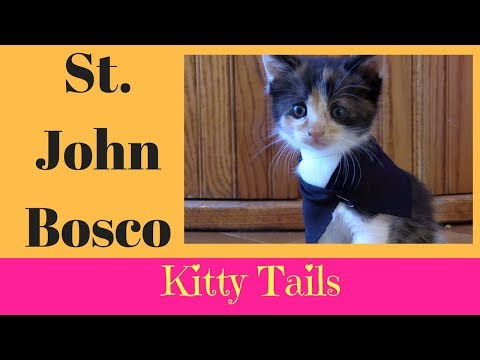 Kitty Tails - Saint Snippets - St  John Bosco