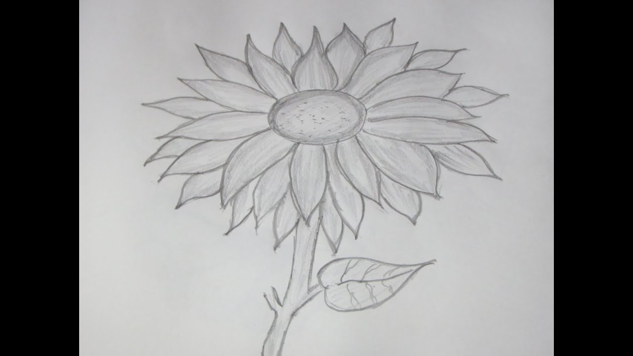 How to Draw and Sketch a Sunflower using Pencil - YouTube