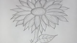 How to Draw and Sketch a Sunflower using Pencil