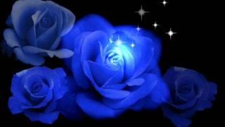 Download Frequenz - Синие розы (ты смеялась надо мной) Mp3 and Videos