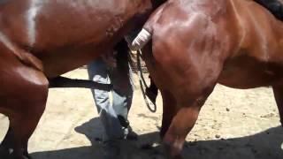 Спаривание коней 2010