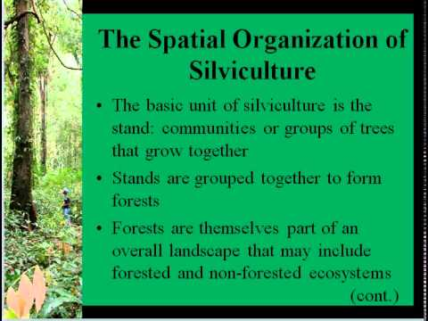 BIOL3465 Basic Silvicultural Terms and Practices Lecture 20