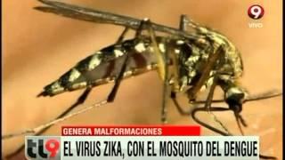 Alerta por el mosquito zika