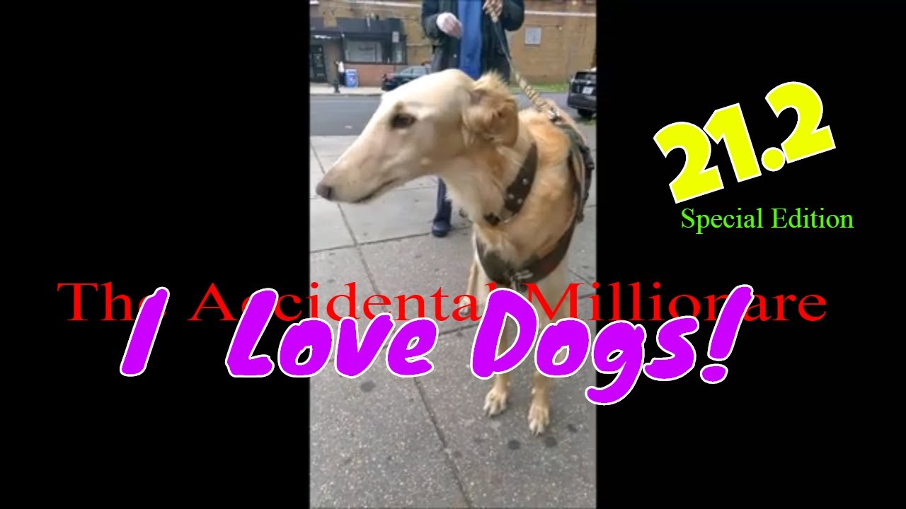 The Accidental Millionaire 21.2 | Kodie , Lucy &The Russian Hound !! | I LOVE DOGS! Special Edit