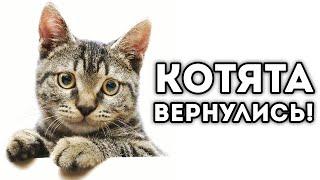 КОТЯТА ВЕРНУЛИСЬ! - STRIKEFORCE KITTY LAST STAND