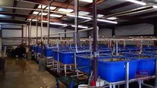 World's Largest Fish Hatchery