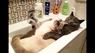 Приколы с кошками и котами Подборка смешных и интересных видео с котиками и кошечками, кошки, коты,