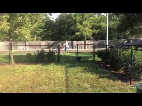 Cypress Pointe Apartments Wilmington video tour cover