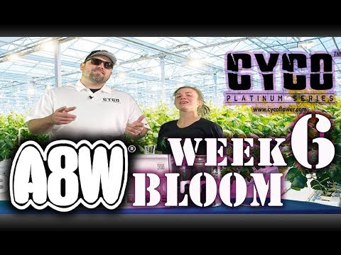 A8W Cyco Nutrients WK 6 Bloom Feed Chart How to SE1EP9 (Official