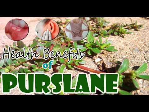 Edible Wild Plants | Many Nutrition and Health Benefits of Purslane | Gardening Tips