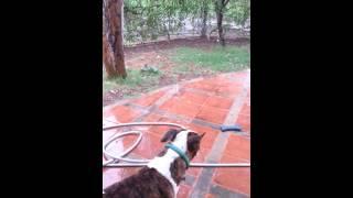 Mi Perro Con Doc /my Dog With Ocd