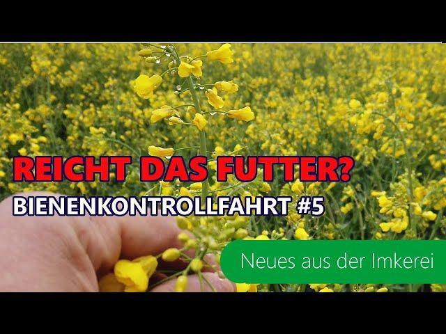BKF#5 -21| Reicht das Futter trotz Rapsblüte? | Schwarmkontrolle | Honigraum | Neues aus der Imkerei