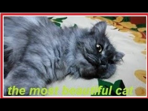 The most beautiful cat1💙== cat gives birth to her children after suffering👍