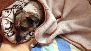 Помогаем бездомной собаке