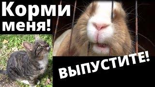 Особенные декоративные кролики. Кот лезет к крольчатам. Вислоухие бараны, крольчата особенный окрас