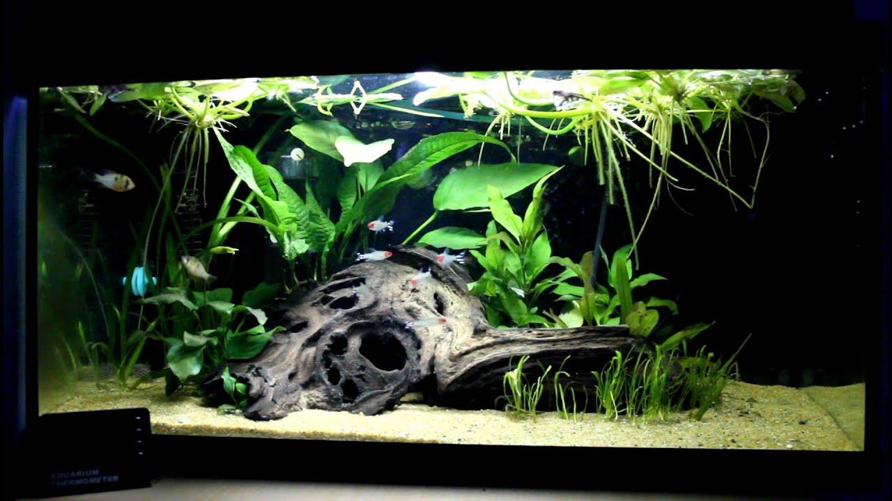 Updated 60 Liter Amazon Style Aquarium Youtube