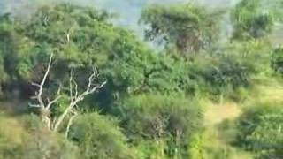 Elephants At Chinnar Wildlife Sanctuary 2