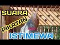 Suara Pikat Burung Prenjak Gacor Dor  Mp3 - Mp4 Download