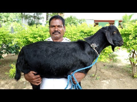 FULL GOAT BIRYANI | Prepared For 100 Peoples | VILLAGE FOOD