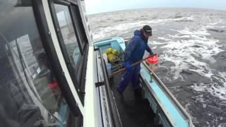 宗谷のタコ漁 11月3日