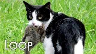 Australia Declares War On 2,000,000 Cats - The LOOP