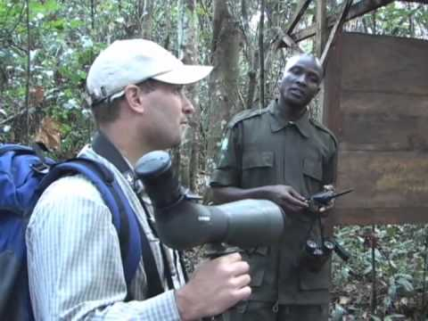 Birds & More: Ugandan Safari