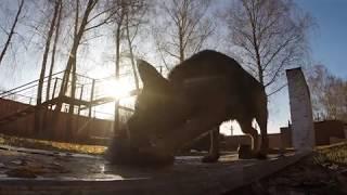 Собаки на службе ФСИН