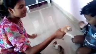 Akshay play with beby cat villege 8108705030