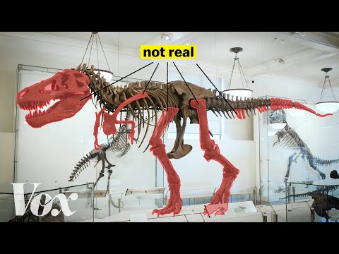 How scientists solved this dinosaur puzzle