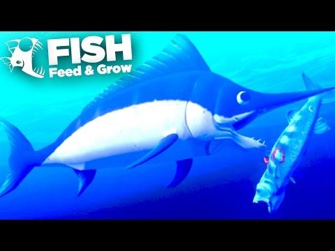 Killer SwordFish!!! - Feed And Grow   Ep7