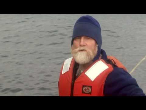 Saumon sauvage du Pacifique, le retour - Documentaire Thalassa