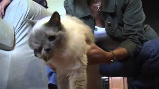 World's oldest two faced cat dies aged 15