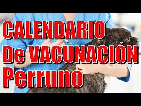 Calendario Perruno.Calendario De Vacunacion Perruno Youtube