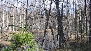 Охота в Вологодской области на вальдшнепа и селезня