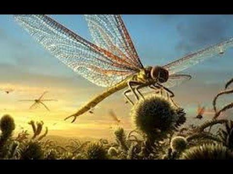 Top 5 des plus grands arthropodes préhistoriques - YouTube