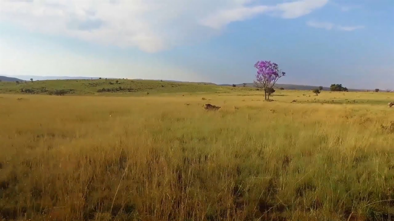 The Cradle of Humankind   National Geographic