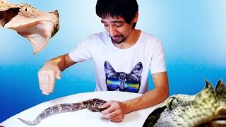 ЧТО ВНУТРИ ГОЛОВЫ ГАДЮКИ? (18+) Анатомия змей на примере африканской гадюки. Часть 1