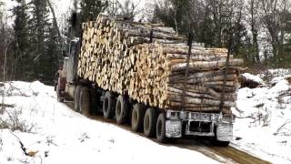 Big hill Peterbilt Logging 359 Classic