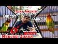 Rawatan Lovebird Konslet Abas Sf Pekanbaru Lovebird Boicot Arnold Dan Sopo  Mp3 - Mp4 Download