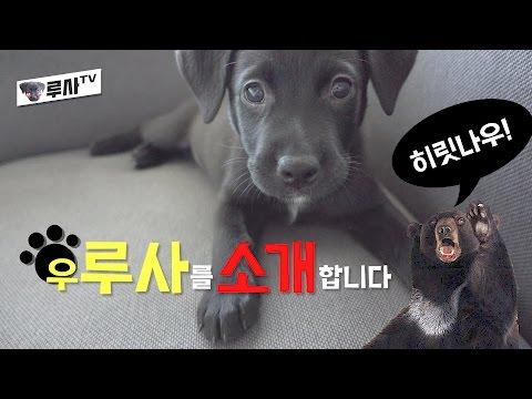 우루사를 소개합니다 [루사의 성장일기] I got a puppy